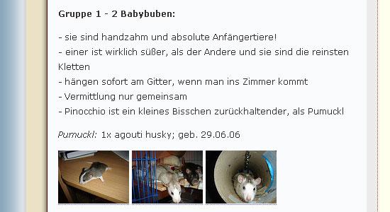 Ratten im Asyl